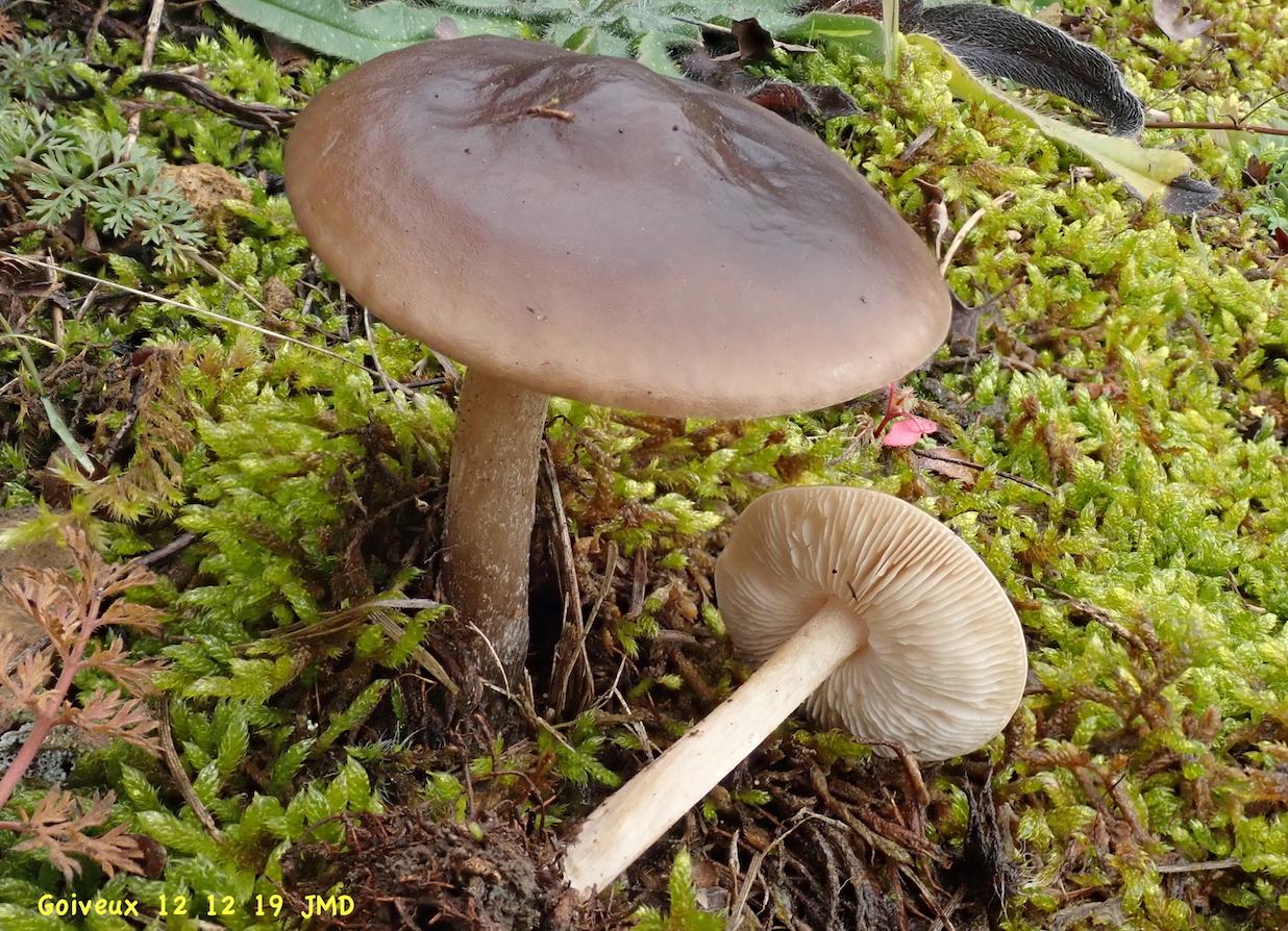 Champignons - Tangara : Nature
